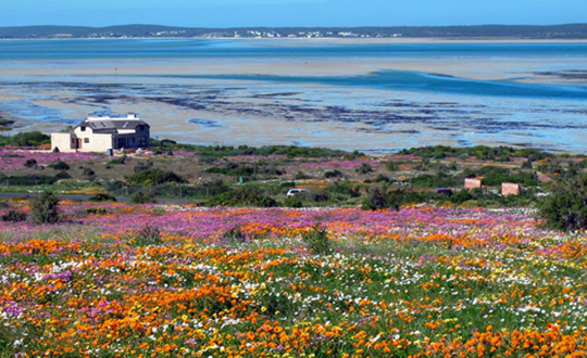 Cape Town in Spring